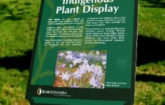 indigenous plant sign