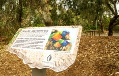 information-sign-about-lorikeets-in-melbourne-park