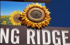 sculpted_sunflower_on_Spring_Ridge_sign